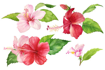 Set of isolated watercolor drawings on a white background. Tropical red and pink hibiscus flower with leaves. Bright pattern for use in design, textile, cover, postcard, print. realistic painting.
