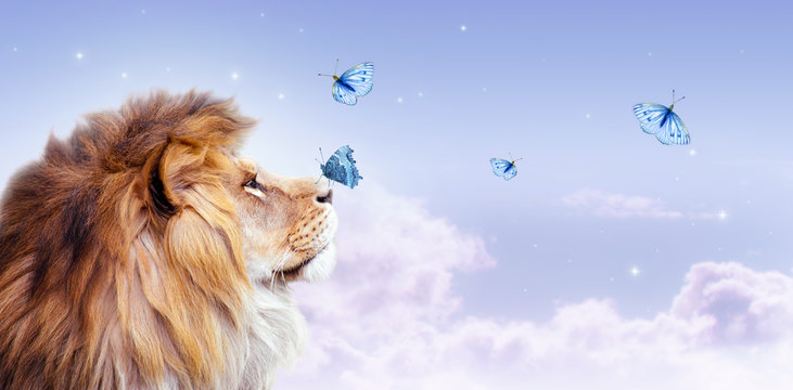African lion with butterfly sitting on nose, morning cloudy sky banner. Landscape with flying butterflies in clouds, king of animals. Proud dreaming fantasy leo looking on stars.