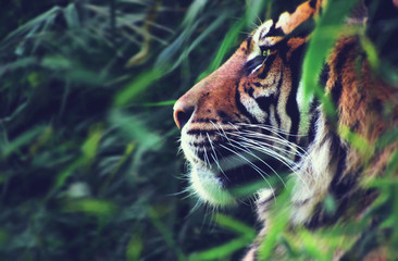 Photo on textile frame Tiger Tiger profile image