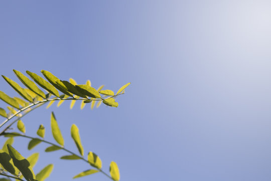 Green leaf with blue sky background on sunny day.