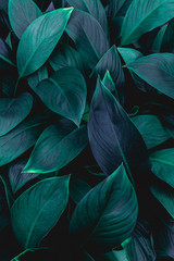 closeup nature view of green leaf in garden, dark wallpaper concept, nature background, tropical...