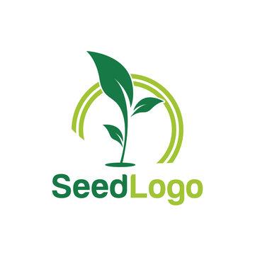 Growing Seed Logo Designs Vector Seed Stock Vector