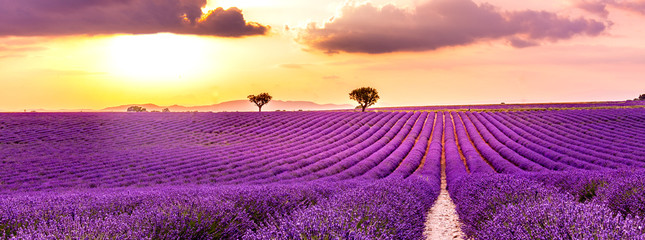 Amazing summer landscape. Lavender field summer sunset landscape near Valensole. Provence, France