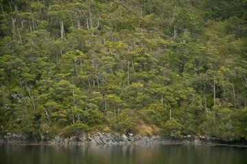 Valdivianischer Regenwald in den Kanälen von Patagonien