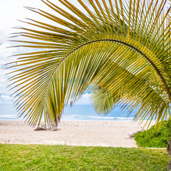 palm tree on the beach of Boucan Canot, Réunion Island