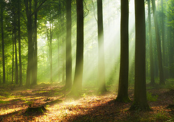 Keuken foto achterwand Bomen Beautiful morning in the forest