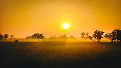 Stores à enrouleur Miel Yellow light sunrise in the morning and fog at the Rice field