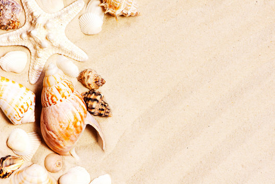 Various seashells and stones on the sand, travel summer background