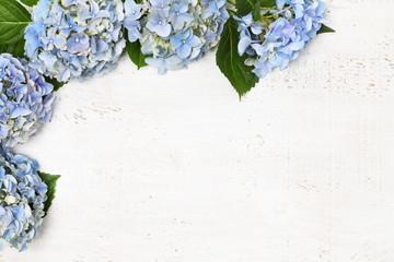 Spoed Fotobehang Hydrangea Beautiful blue hydrangea
