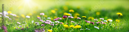 Wall mural Meadow with lots of white and pink spring daisy flowers and yellow dandelions in sunny day
