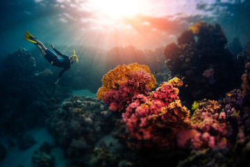 Woman freediver swims underwater and explores vivid coral reefs. Tilt shift effect applied