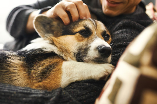 young man owner petting the dog, resting with his pet at home on couch, spending time together, cute Welsh Corgi puppy. Concept friendship with dog and human, cute moments, relaxing, carefree.