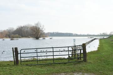 meadow fence of flooded meadow near river IJssel