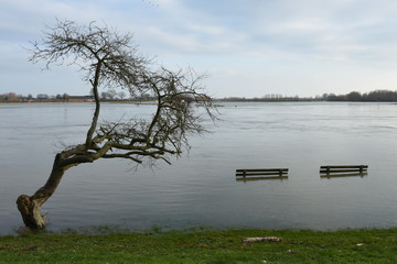 trees and benches in flooded meadow near river IJssel