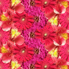 Fototapete - Beautiful floral background of Alstroemeria, Zinnia and Gerbera. Isolated