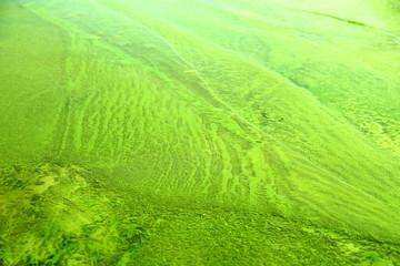 Zielona tekstura wody i lodu.