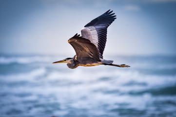 Recess Fitting Bird Bird flying on the beach