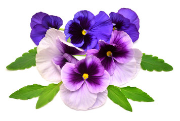 A beautiful bouquet with purple pansy flowers. Branch and leaf with a bud. Blue. Flat lay, top view