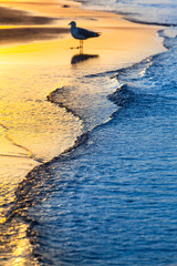 Evening Mood at Coast / Tranquil waves at shore of baltic sea in yellow blue twilight, blurred silhouette of seagull at background reflected at water (copy space)