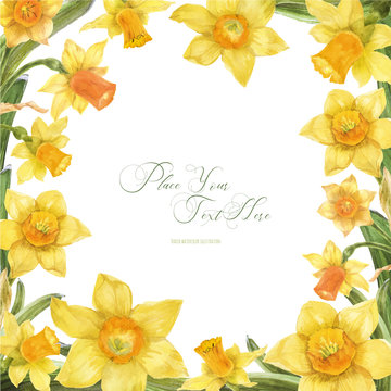 Daffodil watercolor spring floral frame on a white background, traced