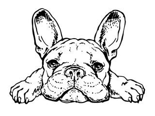 Cute french bulldog sketch. Drawn puppy Fotobehang