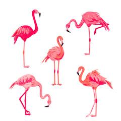 Canvas Prints Pink flamingos set vector illustration. Design element isolated on white background.