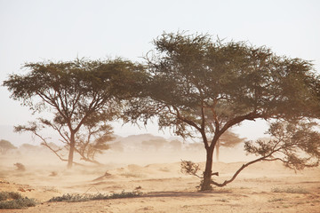 Photo sur Aluminium Blanc African landscapes