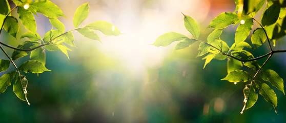 Photo sur cadre textile Printemps fresh green leaves in spring and bokeh background