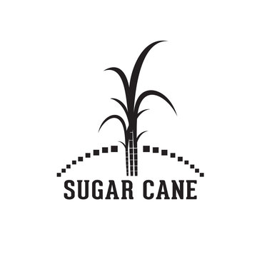 Cane tree vector, can be used for logos, labels, etc.