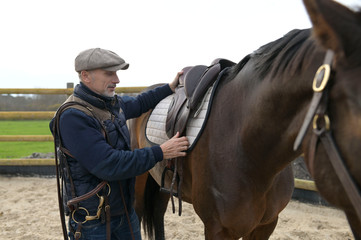 Horseman saddling a horse up