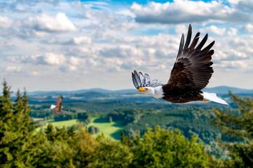 Poster Aigle Adler fliegt in großer Höhe mit ausgebreiteten Flügeln an einem sonnigen Tag in den Bergen.