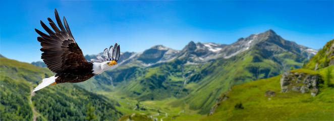 Foto auf AluDibond Adler Adler fliegt in großer Höhe mit ausgebreiteten Flügeln an einem sonnigen Tag in den Bergen.
