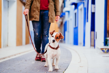 young woman and her cute jack russell dog walking by a colorful street at the city. travel concept