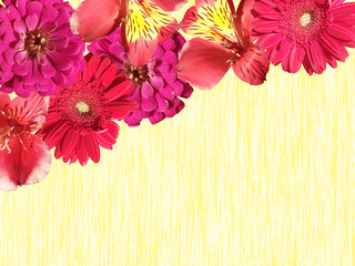 Wall Mural - Beautiful floral background of Alstroemeria, Zinnia and Gerbera. Isolated