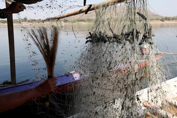 Fisherman cleans algae from his fishing net in Mekong river outside Loei