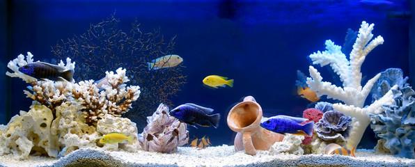 Freshwater aquarium in pseudo-sea style. Aquascape and aquadesign. Wall mural