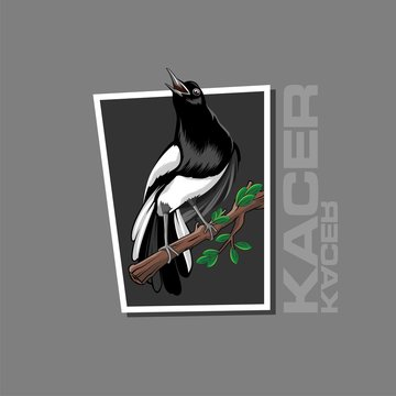 Kacer Photos Royalty Free Images Graphics Vectors Videos Adobe Stock
