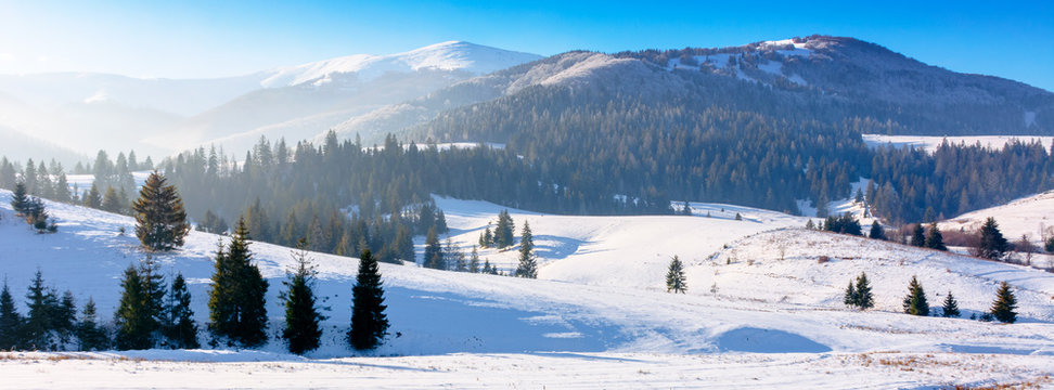 mountainous countryside in wintertime. snow covered rural fields on rolling hills with spruce forest. sunny and frosty afternoon.