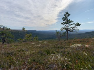 Swedish mountains in summer