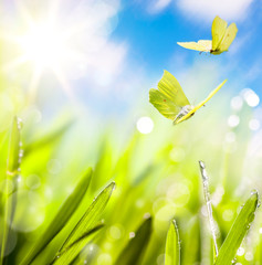 Fototapete - Spring background with fresh grass and fly butterfly against sky background