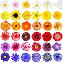 Big Collection of White, Yellow, Orange, Red, Purple and Blue Wild Flowers Isolated on White
