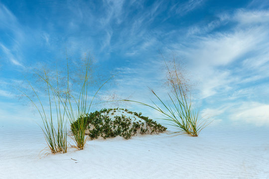 White Sands National Park Vegetation