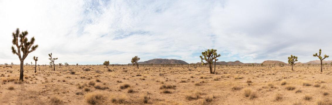 Joshua Tree Landscape in California