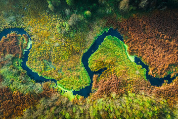 Aluminium Prints Forest river Top down view of river and swamps in autumn, Poland