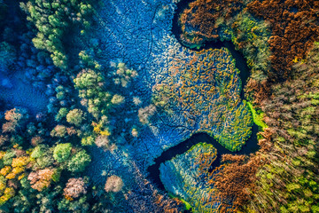Multicolored swamps in autumn, view from above