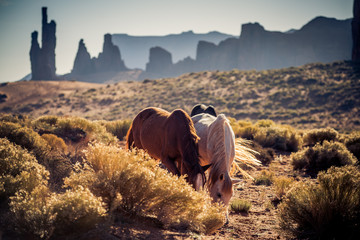 Photo sur Plexiglas Saumon Horses in Monument Valley