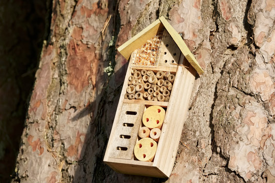 Insect and bee wooden nest house box on tree trunk outdoors