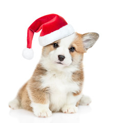 Cute Pembroke Welsh Corgi puppy wearing a red christmas hat sits and looks at camera. isolated on...