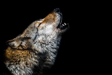 Garden Poster Wolf Howling wolf