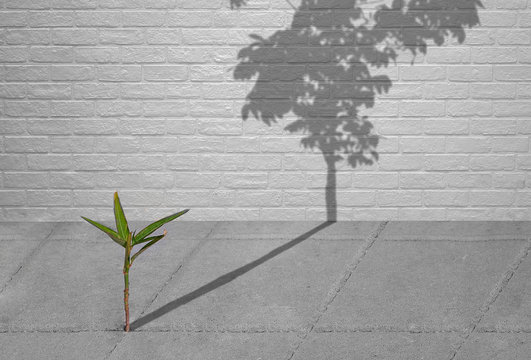 Little green plant growing through crack of pavement with sunlight and long shadow of fully grown tree on surface of brick wall background, create idea of Life is a struggle and hopeful concept